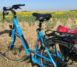 Bike in sunflower field