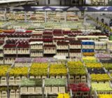 Aalsmeer Holland flower auction