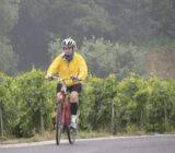 Cycling along the vineyards