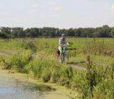 Cyclist in grassland
