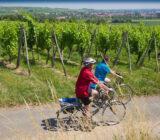 Elsass cycling