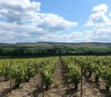 France Champagne vineyards between Chateau Thierry and Epernay