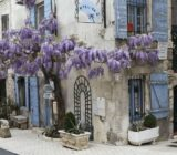 France Provence Camargue  purple rain tree