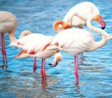 France Provence Camargue National Park pink flamingos