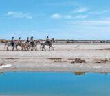 France Provence Camargue horses beach