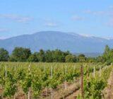 France Provence Camargue vineyard Mnt Ventoux