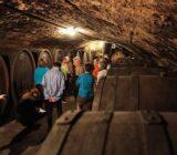France Provence Camargue vineyard tour