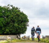 Cycling through sheep along path