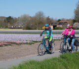 Cycling by tulip field