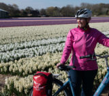 Cyclist by tulip field