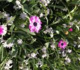 Flowers Keukenhof