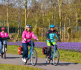 Cycling along tulip field