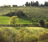 Italy Tuscany Sail and Bike vineyard