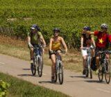 Cycling along vineyards