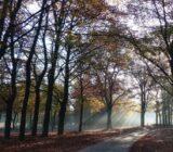 Veluwe Forest