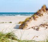 Terschelling dunes