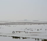 Waddenzee and Friesland staff Sandra Terschelling mudflat